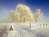 Misty winterlandscape, Upper Bavaria, Germany
