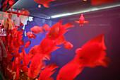 goldfish aquarium,Aquarium für Goldfische, Fussgaengerunterführung, pedestrian tunnel, red fish,  Fengshui, Fungshui