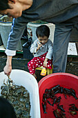 mobile phone, child of a seafood salesman plays with a mobile phone, crab, shrimps