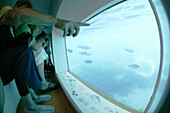 Costa Brava,Fischbeobachtung Glasbodenboot Nautilus, Gewässer bei den Illes Medes, Costa Brava, Katalonien Spanien