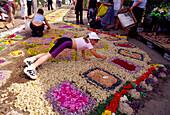Preparing Flower Carpets (lenght 2 kilometers) for Corpus Christi in Spicimierz near Lodz, Poland