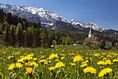 Flowers in front of Elmau Castle, Wetterstein Mountains, Werdenfelser Land, Upper Bavaria, Germany