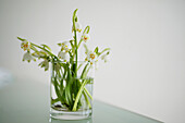 Bouquet of lilies of the valley in a glass