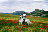 Horse rider in a poppy field near Puerto Lopez,Province Granada,Andalusia,Spain