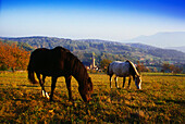 Horse Paddock near Breitenbach,Vosges,Elsass,France