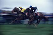 Jockeys at full speed at Dingle races, Dingle, County Kerry, Ireland