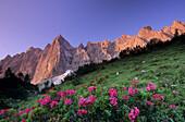 Laliderer Range with Rhododendron, Karwendel Range, Tyrol, Austria