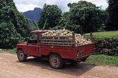Pineapple Truck,Paopao Valley, Moorea, French Polynesia