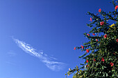Wolke in der Form eines Fisches und rote Hibiskus,Französisch Polynesien