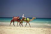 A local man riding a camel on the beach, Jumeirah Beach, Dubai, United Arab Emirates