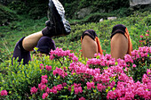 Two pairs of legs in a meadow with alpine roses, rhododendron, Dachstein range, Styria, Austria