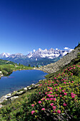 Lake Gasselsee with alpine rose, rhododendron, and Dachstein range in the background, Schladminger Tauern, Styria, Austria