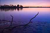 Shore of the Schlei loch at sunset light, Schleswig-Holstein, Germany