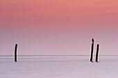 Sea bird sitting on pole, Fehmarn Island, Baltic Sea, Schleswig-Holstein, Germany
