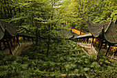 Canopied stairs leading through the forest to Ronshen monastery, Jiuhua Shan, Anhui province, China, Asia