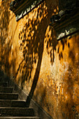 A tree's shadow on the yellow wall of Fayu monastery on Putuo Shan Island, Zhejiang Province, China, Asia