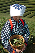 Japanese woman with a basket of tea leaves, Uji, Kyoto district, Japan