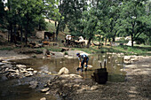 Man Goldpanning, Gold Prospecting Expeditions, Jamestown, California, USA