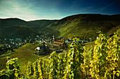 Blick auf Mayschoß, Ahrtal, Eifel, Rheinland-Pfalz, Deutschland