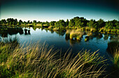 Ewiges Meer, near Westerholt, East Friesland, Lower Saxony, Germany