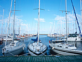 sailing boats in harbor, aero, denmark, baltic seawater, safety, secure, fender, ropes, destination, mast, sailing, sail