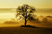 An Autumn landscape near Bitburg, Eifel, Rhineland-Palatinate, Germany