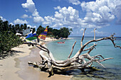 Driftwood on a beach, Near Speightstown, St. Peter, Barbados, Carribean