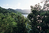 Hillside Vegetation, Port Elizabeth, Bequia, St. Vincent & The Grenadines, Carribean