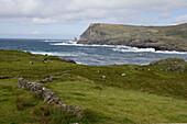 Cattle & Coastline, Near Glencollumcille, County Donegal, Ireland