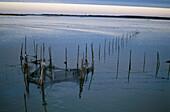 Fishing net, Hiddensee Island, Mecklenburg-Western Pomerania, Germany