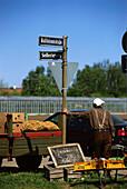 Man selling vegetables in Knoblauchsland, Nuremberg, Franconia, Bavaria, Germany