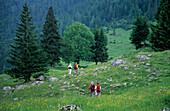 Hiker walking through a sea of flowers on an alpine pasture, Geigelstein, Chiemgau, Upper Bavaria, Bavaria, Germany
