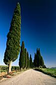 A row of cypress trees, Toskana, Italy, Europe