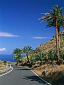 Road, palm tree, see near Agaete, West Coast, Gran Canaria, Canary Islands, Spain