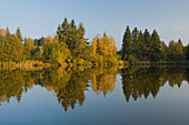 Lakeshore with yellow coloured birch trees, autumn, Schmuttersee, lake with water reflection, near Fuessen, Allgaeu, Upper Bavaria, Bavaria, Germany