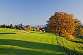 An Autumn landscape, Eberfing, near Weilheim, Bavaria, Germany