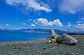 Driftwood on a pebble beach, Kaikoura, South Bay, South Island, New Zealand