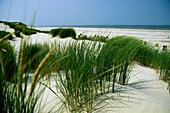 View over dunes to beach with beach chairs, Juist island, East Frisian Islands, Lower Saxony, Germany