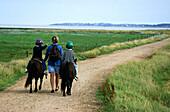 Hiking trail, Amrum, North Frisian, Islands, Schleswig-Holstein, Germany