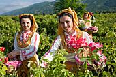 Rose picking girls at harvest, Rose Festival, Karlovo, Bulgaria, Europe