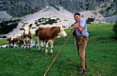 alpine cow boy feeding young cattle in alpine landscape, Rinderfeld beneath Bischofsmütze, Dachstein range, Salzburg, Austria