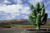Giant cactus sculpture, entrance of the cactus garden designed by Cesar Manique, Guatiza, Lanzarote, Canary Islands, Spain