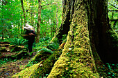 Wandern auf dem Hoh River Trail, Hoh rain Forest, Olympic National Park, Washington, USA