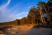 Woodland and beach at Sand Point near Ozette, Olympic National Park, Washington, USA