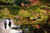 Autumn leaves on trees, viritors of Ryoanji Temple, Kyoto, Japan