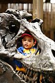 A child looking through a sculptur of a dinosaur in Washington Zoo, Washington DC, United States, USA