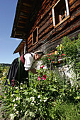 Mature woman picking flowers, Hohe Tauern, Salzburger Land, Austria
