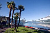 Palmen am Seeufer des Lago Maggiore, Ascona, Tessin, Schweiz
