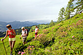 Three hikers walking over a meadow with alpine roses, Grossarl Valley, Salzburg, Austria
