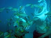 Unterwasserbild von Fischen und Menschen mit Helmen beim Sea Trek Underwater Walk, De Palm Island, Aruba, ABC-Inseln, Niederländische Antillen, Karibik
